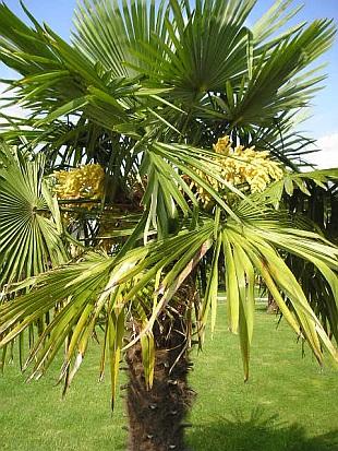 Exotická zahrada