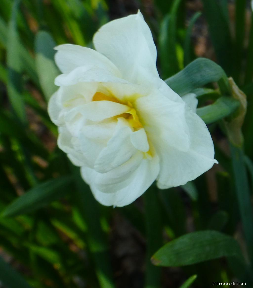 Narcis - Narcissus Bridal Crown