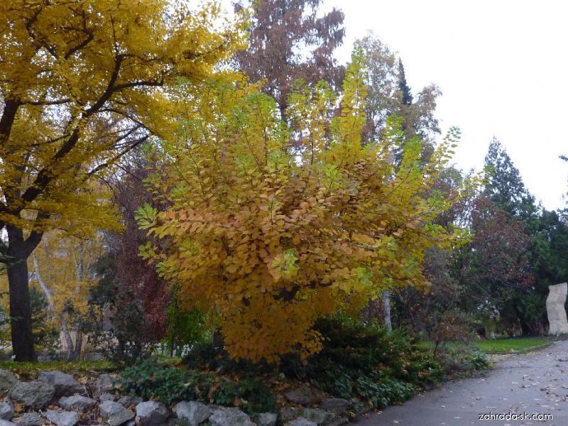 Botanická zahrada Praha Na Slupi