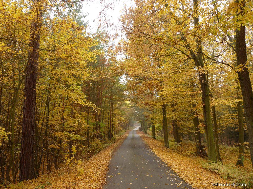Dendrologie - les na podzim
