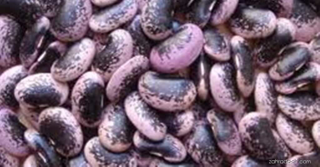 Fazuľa šarlátová - plody fazule sa možu rozdrviť na prášok a využívať pri liečbe cukrovky (Phaseolus coccineus)